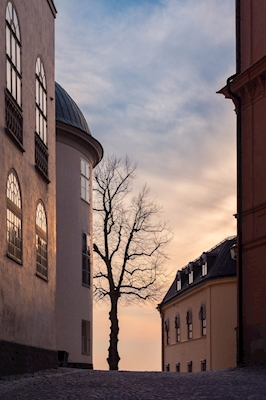 Sunset and tree i old town