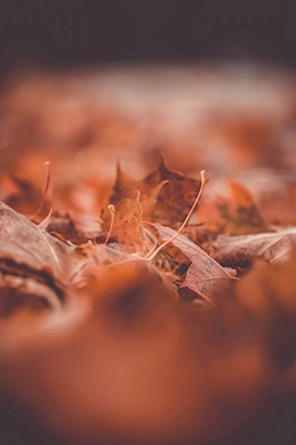 In love with autumn