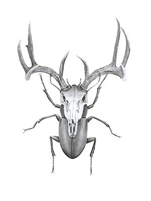 Mr Stag Bettle