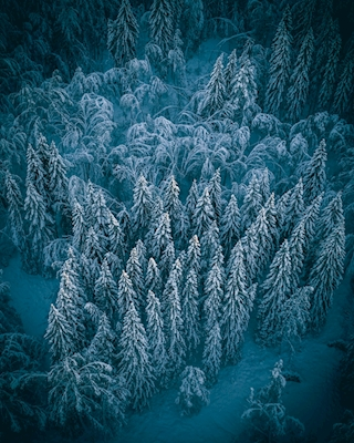Cozy Winter Forest - Part One