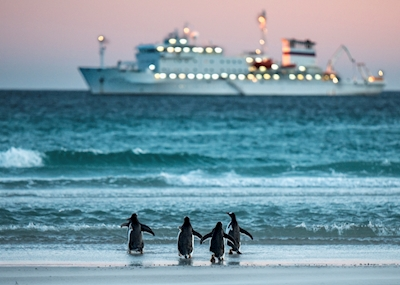 Penguins. Miss the boat .