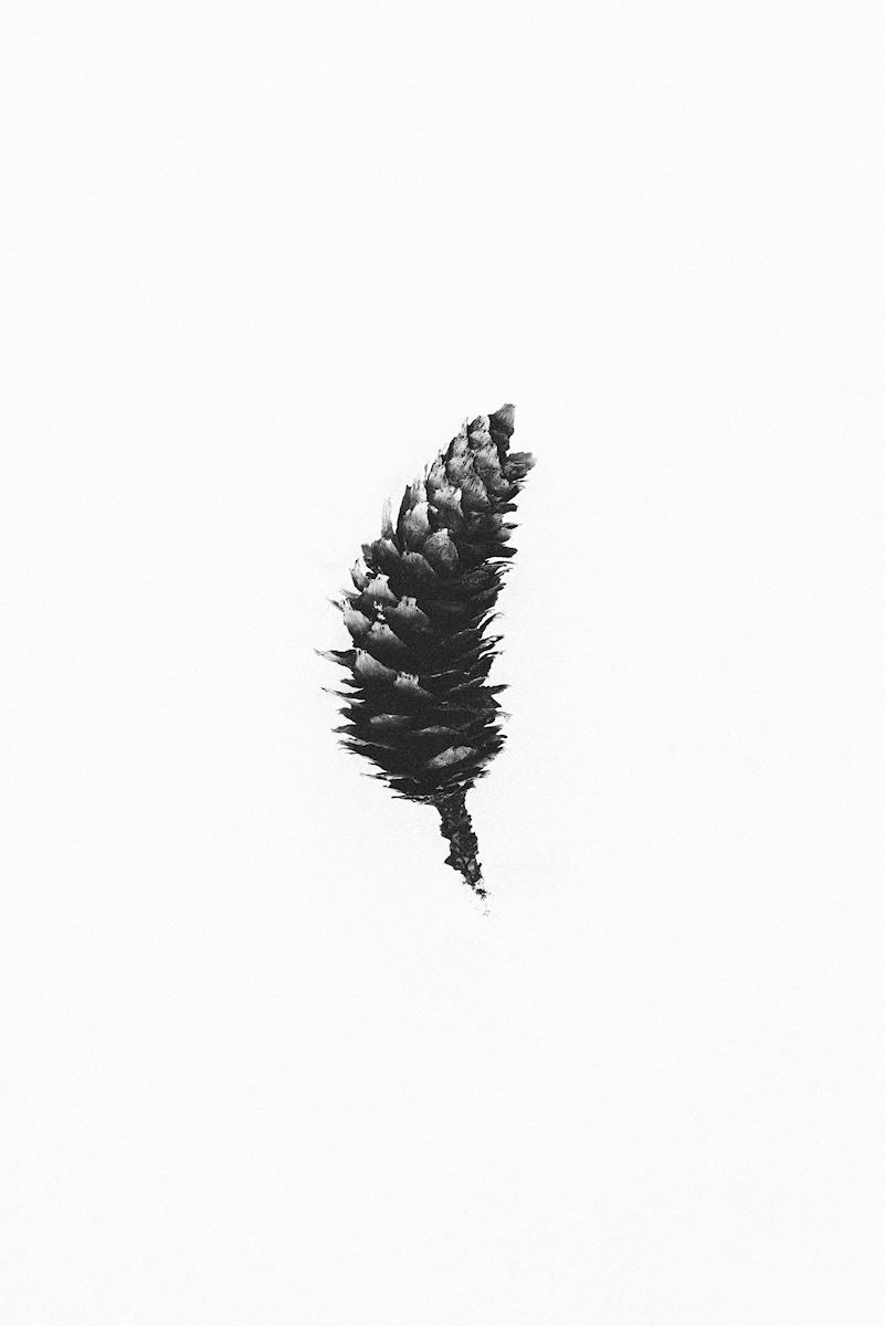 Big Pinecone posters & prints by Rania Rönntoft