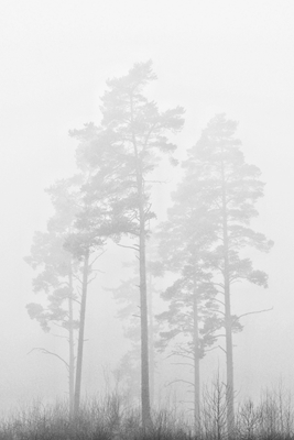scetched by fog